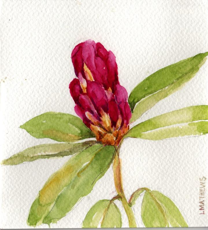 Monarch Rhododendron blossom