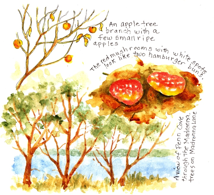 Apples on the branches, red capped mushroom and madronna trees at Penn Cove