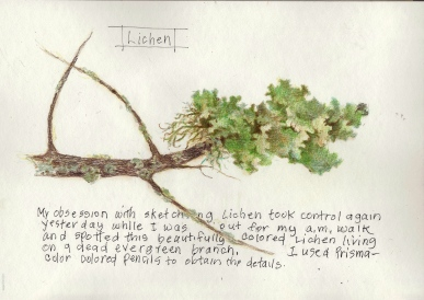 Another Lichen
