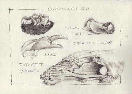 Barnacles, snail shell, Crab Claw and Driftwood