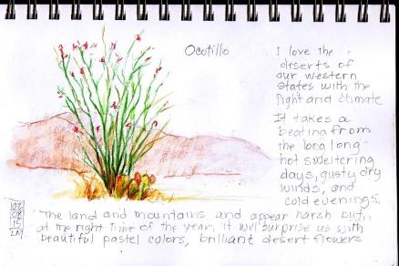 Ocotillio Plant
